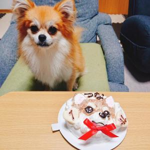 愛知県A様、つなちゃんの記念すべき1才のお誕生日ケーキを/フレブルのデイジーちゃん初!ワンバナへ