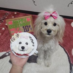 大阪Sさまラムちゃん10才のお誕生日シーン遠/トイプーのココアちゃんワンバナハロウィンエントリー