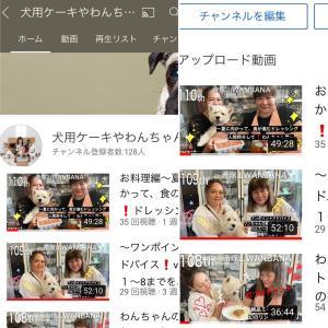 ワンバナライブ配信111回めワンポイントアドバイス9〜16/チワワのユキちゃん/柴犬のトキちゃん