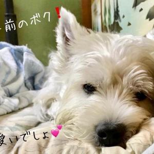 可愛いでしょbyチャンタ/岐阜県S様シン&ぽんた君モコちゃんお誕生日!/ポメのクロちゃんワンバナ