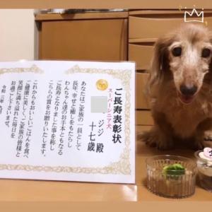 東京都ジジちゃん17才スーパーシニア犬表彰状とお写真、感謝のメッセージをWANBANA下さった!