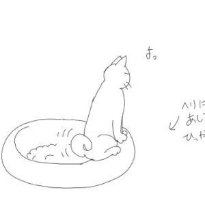 ねこトイレ事情