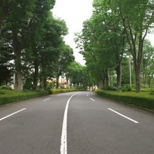 八王子見て歩記/御陵とケヤキ並木(初夏)