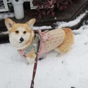 春の雪は儚くて。それでも遊びできました!