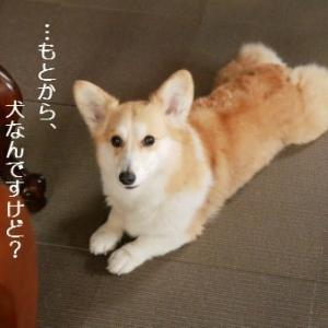 今、夢中になっているもの。そして…犬?