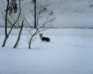 雪遊び旅…すると、コギ父VSもりしの起源!