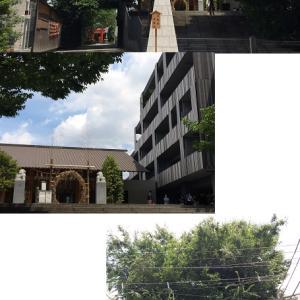日本で最もオシャレな神社で拝んだ後は、御神酒ジェラート…神楽坂の赤城神社にある神社カフェ