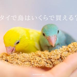 タイ(バンコク)で鳥さんを買ったらおいくら?ヨウムがたったの〇万円。