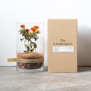 楽しみにしていたThe Landscapersが入荷!