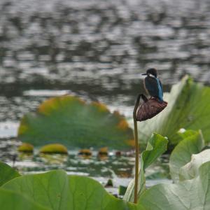某小さな沼の鳥達
