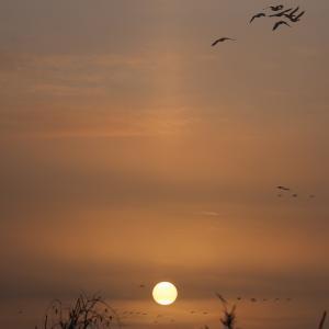 K沼の夜明け