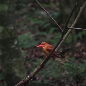赤い鳥遠征 1
