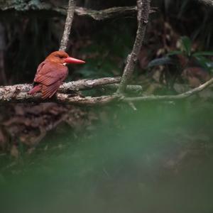 赤い鳥遠征202006 2
