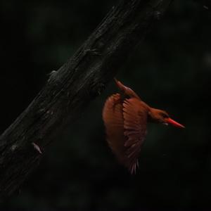 赤い鳥遠征202006 3