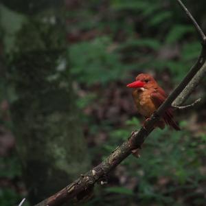 赤い鳥遠征202006 4