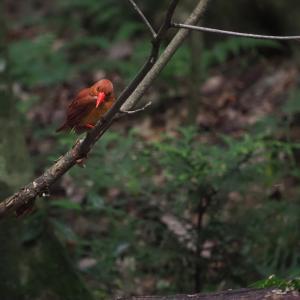 赤い鳥遠征202006 7