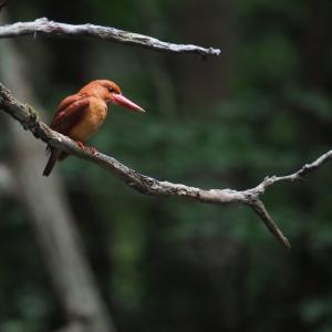 赤い鳥遠征202006 8