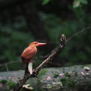 赤い鳥遠征202007 1