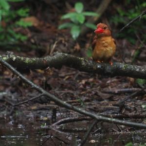 赤い鳥遠征202007 2