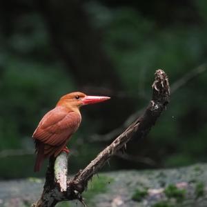 赤い鳥遠征202007 3