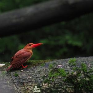 赤い鳥遠征202007 4
