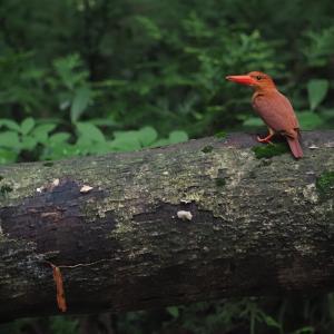 (赤い鳥)遠征202007 5