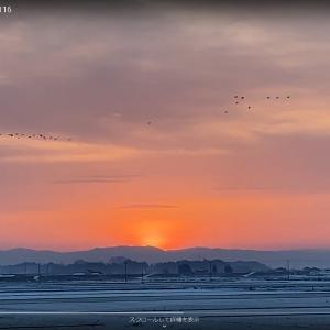日の出とマガンの飛び立ち by iPhone SE