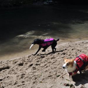 川遊びキャンプ