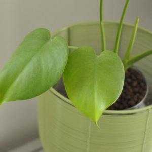 春の観葉植物
