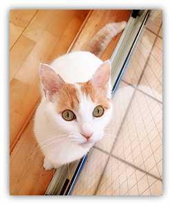 【フォト】猫&今日のエントリー&セールetc
