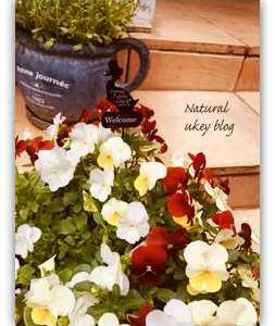 【エントリー】お買い物マラソン&【期間限定55%オフ】リファ&庭の花などなど