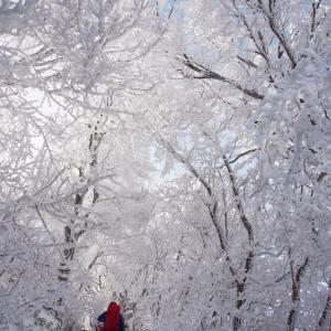 雪山を歩きたいお客様~♪