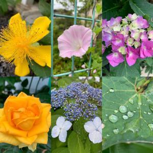 今日であったお花たち