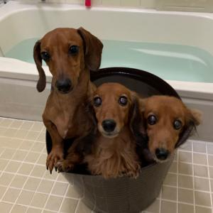 お風呂もつづくよどこまでも。