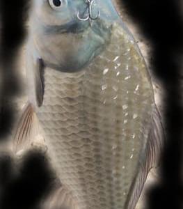 小貝川水系釣行 2.07