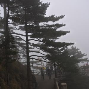 黄山の松の木 やはり綺麗