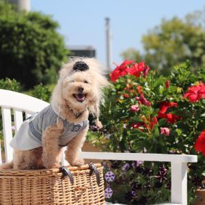 見ごろ風!?夏花を楽しむ♪でふ