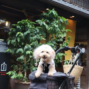 五十鈴川カフェさん♪でふ