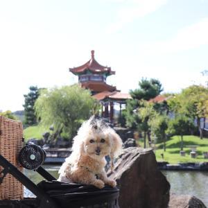 中国庭園『燕趙園』さん♪でふ