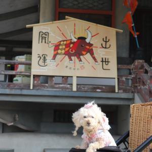 豊国神社さん♪でふ