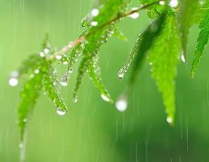 とうとう梅雨入り!!