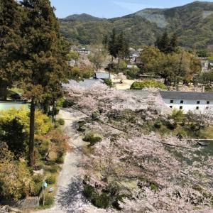 中年の日本帰郷 Vol.23 満開桜の岩国満喫コース【ロープウェイ~岩国城】