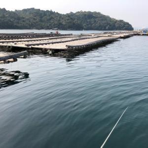 中年の日本帰郷 Vol.16 初の牡蠣筏釣り〜チヌ掛かりラッシュ編