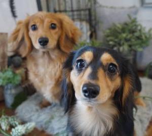◆愛すべきトゥクトゥク犬 るなちゃん&りんちゃん(*'▽')