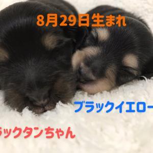 ◆8月29日生まれの子犬ちゃん(o^^o)