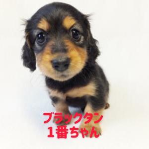◆7月31日生まれの子犬ちゃん(^ ^)
