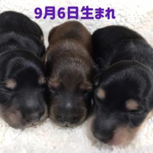 ◆babyちゃん、生まれました(╹◡╹)