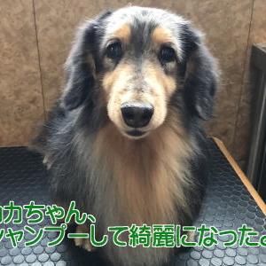 ◆カカちゃん、シャンプーしました(^_-)-☆