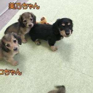 ◆8月9日生まれの子犬ちゃん(*^▽^*)
