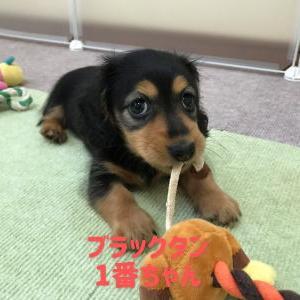 ◆7月31日生まれの子犬ちゃん!(^^)!